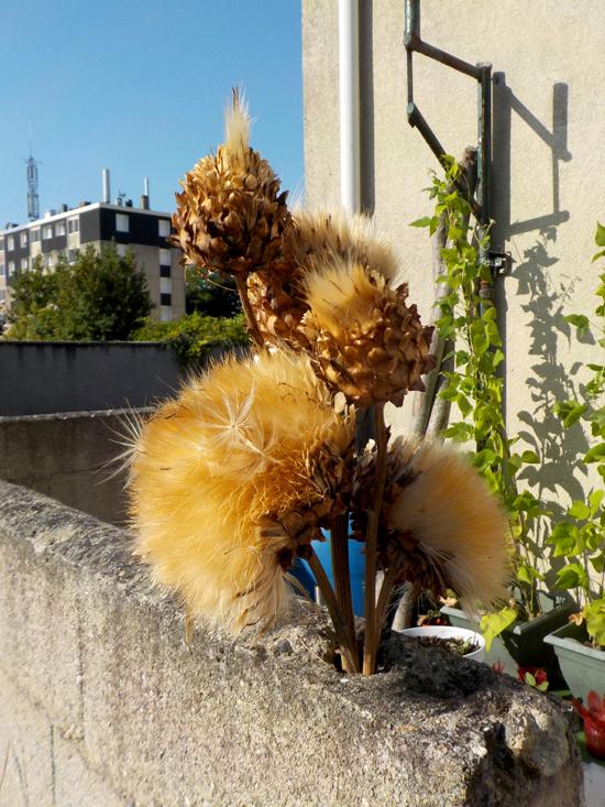 Petit sauvetage de plantes